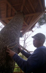 Treedom018