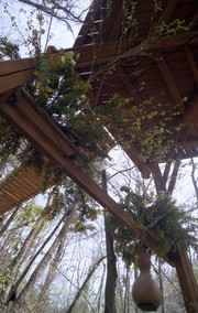 Treedom020_1