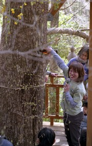 Treedom026_2